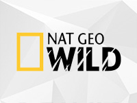 NET GEO WILD HD